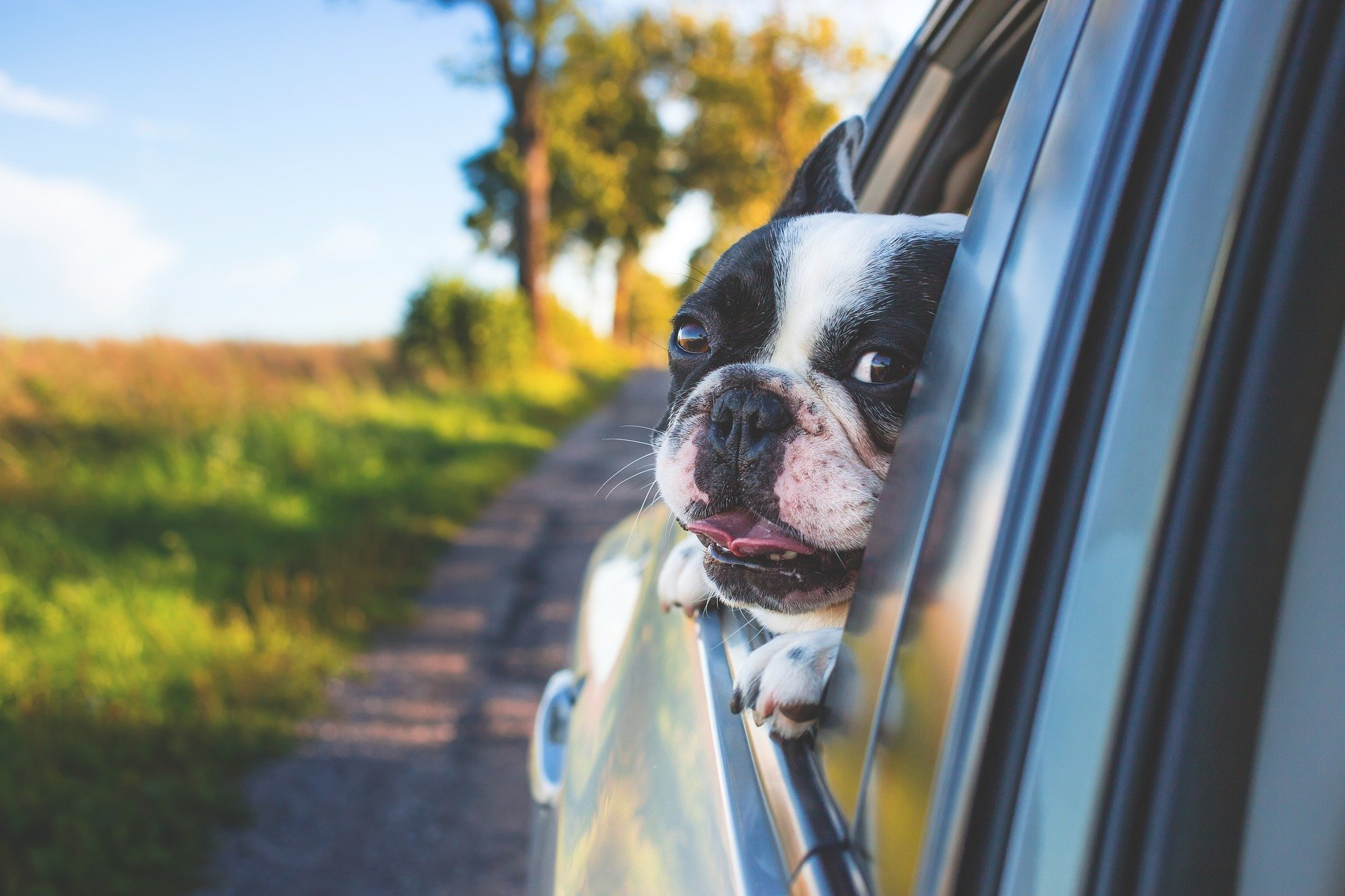 10 Best Cars for Dog Owners